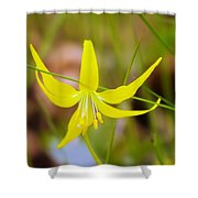 A Lilly In Bloom  Shower Curtain