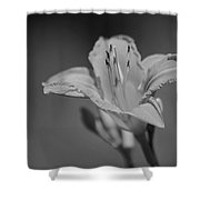 A Lily Shower Curtain