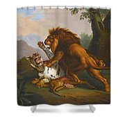 A Lion And Tiger In Combat Shower Curtain