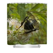 A Little Bee-hind Shower Curtain