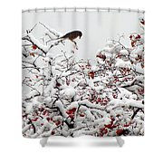 A Little Bird So Cheerfully Sings Shower Curtain