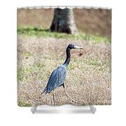 A Little Blue Heron Shower Curtain