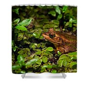 A Little Bronze Shower Curtain