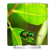 A Little Red Beatle Shower Curtain