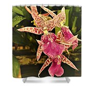 A Living Orchid Looks Like Animal Print Doesnt It So Beautiful Shower Curtain