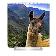A Llama In The Cajas In Ecuador Shower Curtain