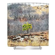 A Lonely Pine Tree Shower Curtain