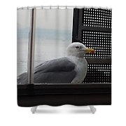 A Looking Seagull Shower Curtain