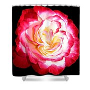 A Magnificent Rose Shower Curtain