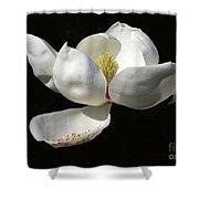 A Magnolia Flower Shower Curtain