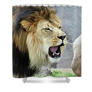 A Male Lion, Panthera Leo, Roaring Loudly Shower Curtain