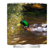 A Male Mallard Duck 3 Shower Curtain