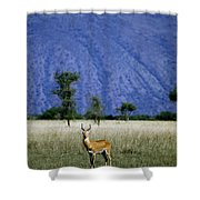 A Male Ugandan Kob Stands His Ground Shower Curtain
