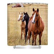 A Mare And Two Friends Shower Curtain