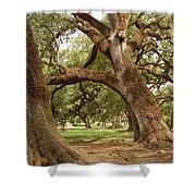 A Maze Of Oak Trees  Shower Curtain