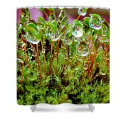 A Microcosm Of The Forest Of Moss In Rain Droplets Shower Curtain