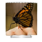 A Monarch Butterfly At The Butterfly Shower Curtain