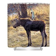 A Moose In Early Spring  Shower Curtain