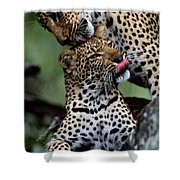 A Mother Leopard, Panthera Pardus Shower Curtain