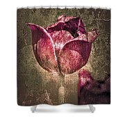 A Mother's Day Card Shower Curtain