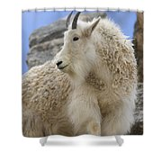 A Mountain Goat Oreamnos Americanus Shower Curtain
