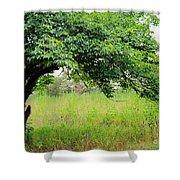 A Mulberry Summer Shower Curtain