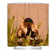 A Napping Mallard Shower Curtain