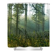 A New Day Has Come Shower Curtain