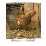 A New Hampshire Red Hen Chicken Shower Curtain