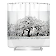A New Year Shower Curtain