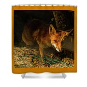 A Nocturne  Meeting With A Fox In The Woodland Shower Curtain