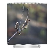 A Pair Of Cedar Waxwings Enjoying Lunch Shower Curtain