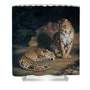 A Pair Of Leopards Shower Curtain