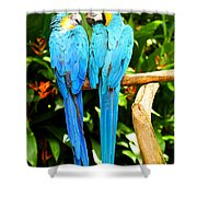 A Pair Of Parrots Shower Curtain