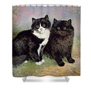 A Pair Of Pussy Cats Shower Curtain