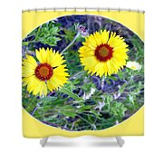 A Pair Of Wild Susans Shower Curtain