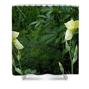A Pair Of Yellow Bearded Iris 2 Shower Curtain