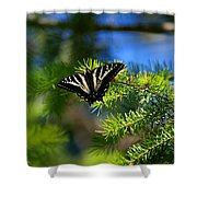 A Pale Swallowtail Shower Curtain