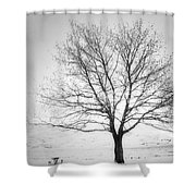 A Pale Winter Shower Curtain