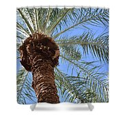 A Palm In The Sky Shower Curtain