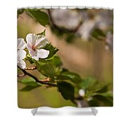 A Panoramic View Of A Cherry Tree Shower Curtain