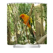 A Parakeet In Paradise Shower Curtain
