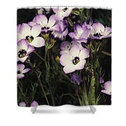 A Patch Of Wildflowers With White Shower Curtain