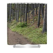 A Path In The Woods Shower Curtain