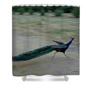 A Peacock On A Hog Farm In Kansas Shower Curtain