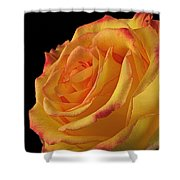 A Perfect Rose #2 Shower Curtain