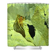 A Perky Chipmunk  Shower Curtain
