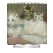 A Persian Cat And Her Kittens Shower Curtain by Maud D Heaps