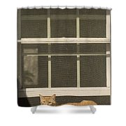 A Pet Cat Resting In A Screened Window Shower Curtain