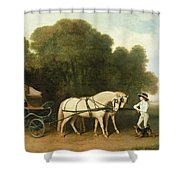 A Phaeton With A Pair Of Cream Ponies In The Charge Of A Stable-lad Shower Curtain